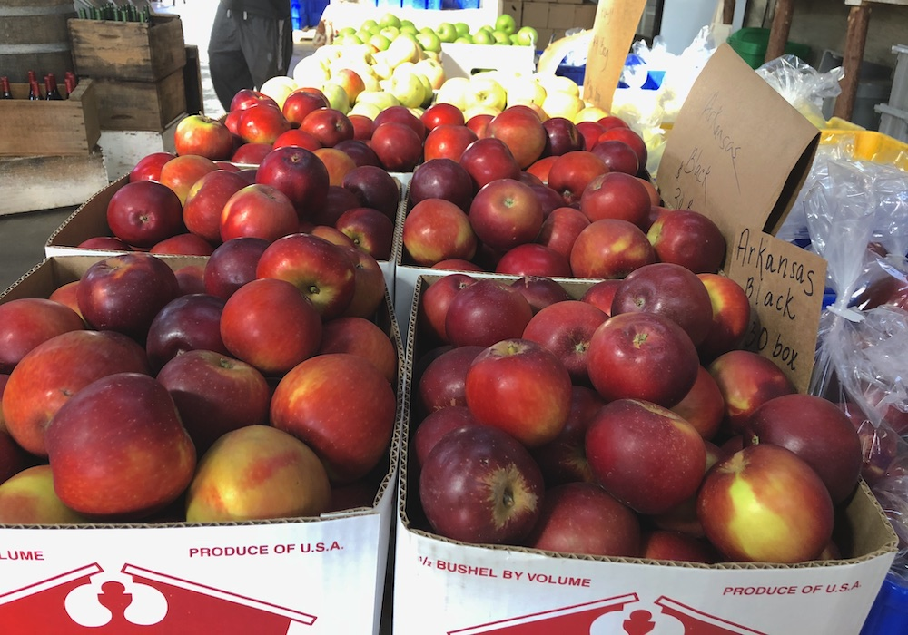 Apples at Apple Hill